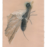 <p>Hummer, 2014.&nbsp; Mixed media and found objects on fabriano paper, 8 x 10 inches</p>