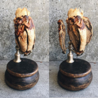 """<p style=""""text-align: center;""""><strong>Plastinated donkey heart</strong></p> <p style=""""text-align: center;"""">2018</p>"""