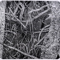 "<p align=""center"">Trimmed Hedge</p>