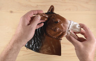 <p><em>Don&rsquo;t Look a Gift Horse in the Mouth</em>.</p> <p>Video Still</p>